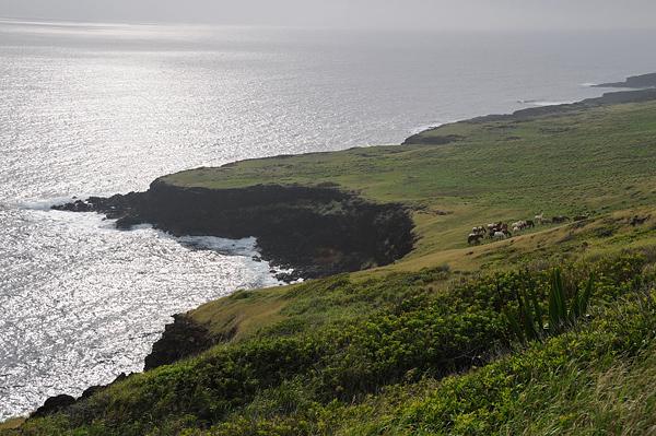 Singles in honaunau napoopoo hawaii