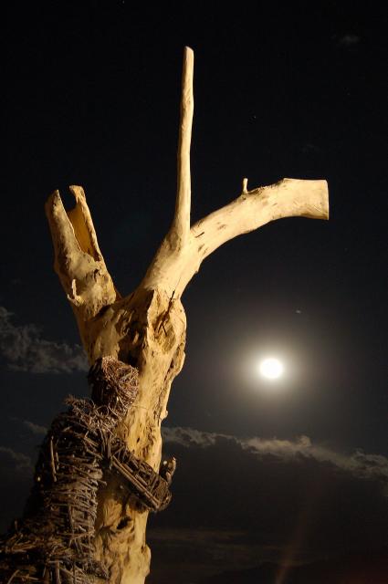 Burning Man Stick Woman Tree Art Scultpure