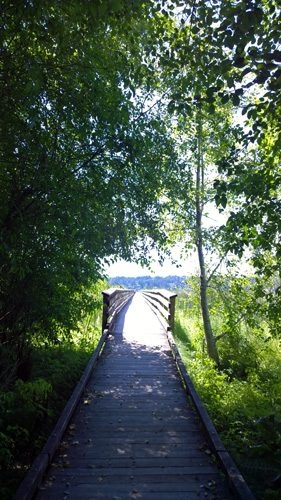 Theler Wetlands South Tidal Marsh Trail boardwalk in Belfair on Hood Canal