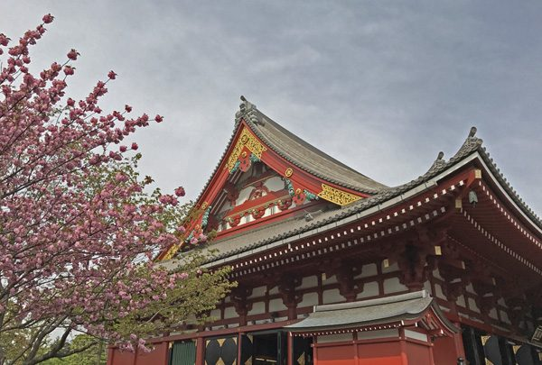 Senso-ji temple and cherry tree blossoms in Asakusa Tokyo Japan
