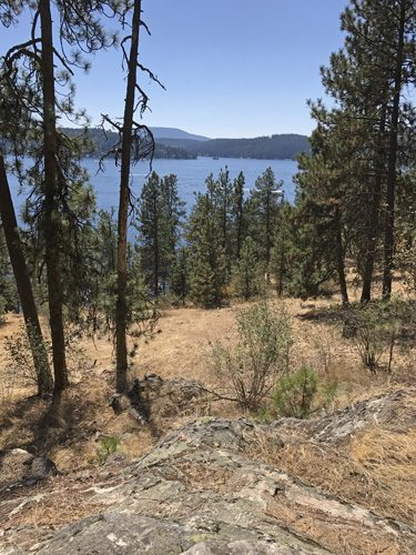 View from Tubbs Hill park through forest to Lake Coeur d'Alene Idaho