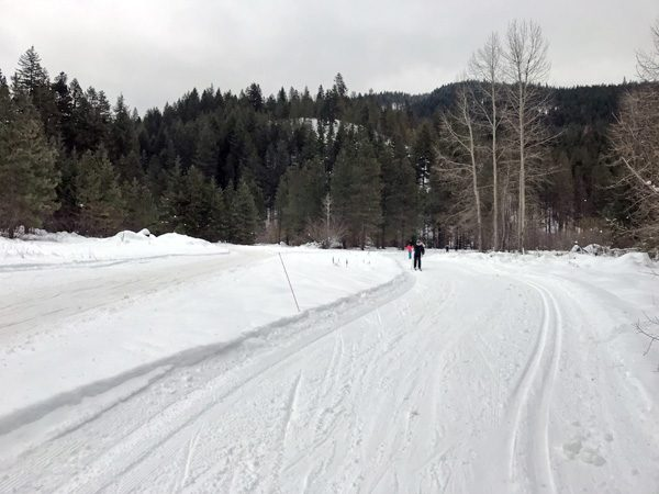 Plain Valley Nordic Ski Trails in forest
