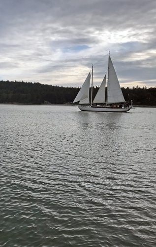 Suva sailing Coupeville Penn Cove