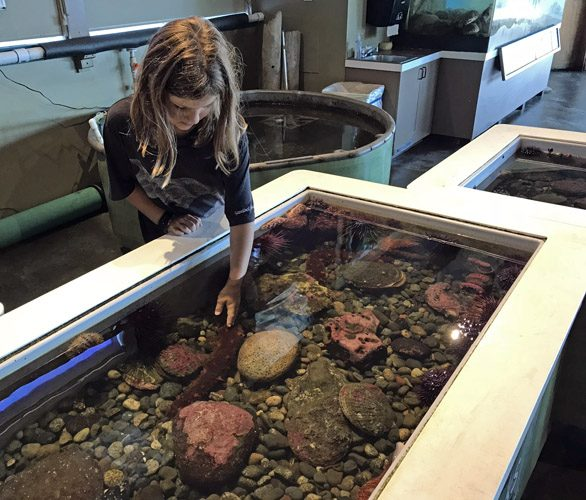 Touch tank in Feiro Marine Life Center in Port Angeles