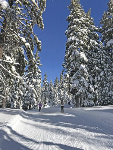 Cross-country skiing through forest on Mt Bachelor Nordic Ski Center trails