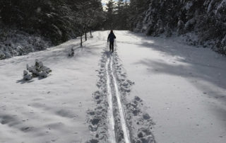 Cross-country Nordic skiing Whidbey Island Coupeville