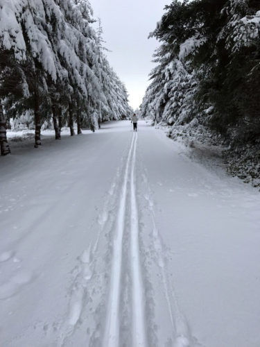 Cross-country skiing on Whidbey Island driveway road