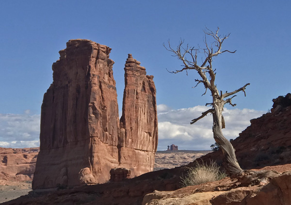 Arches National Park Park Avenue Trail rock formations, juniper tree, Balanced Rock