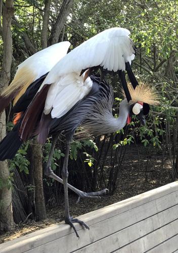 Cartagena Colombia National Aviary Aviario Nacional colorful bird