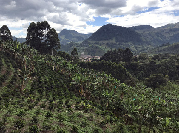 Coffee and banana plantation on outskirts of southeast Jardin Colombia