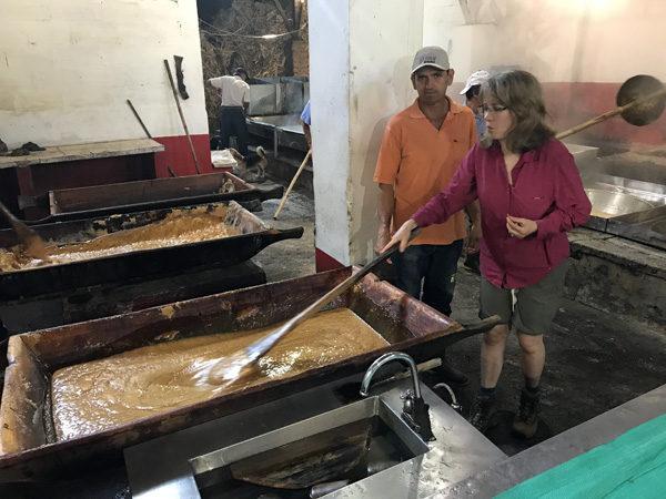Helping make panela sugar at Trucheta Molienda in northern outskirts of Jardin Colombia
