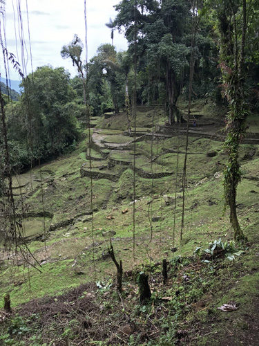 Home terraces and stone paths at The Lost City Ciudad Perdida of Colombia