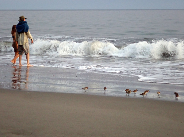 Olympic National Park Peninsula Third Beach hikers by Pacific Ocean waves with sandpiper birds