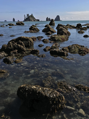 Olympic National Park Peninsula beach rocks intertidal life sea stacks